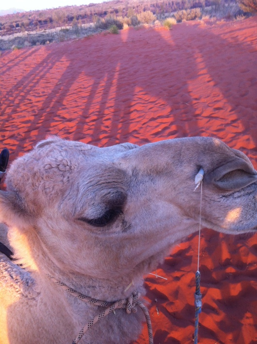 camel tour3